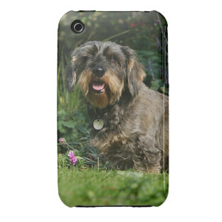 Wire-haired Standard Dachshund Sitting iPhone 3 Covers