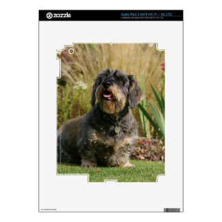 Wire-haired Standard Dachshund Decal For iPad 3