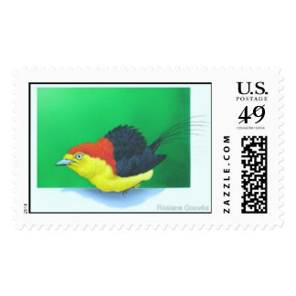"""""""Wire-tailed Manakin"""" (male) Stamps"""