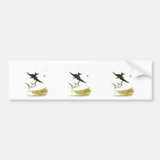 Wire-tailed Swallow Bumper Sticker