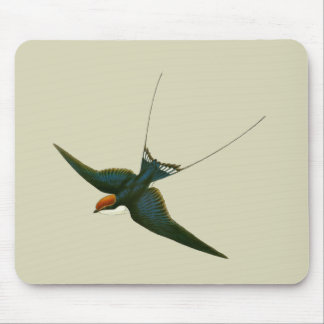 Wire-tailed Swallow Mouse Pad