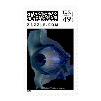 wireframe 3d de los músculos de ojo en un zócalo envio