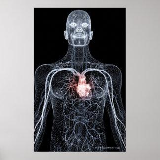 Wireframe de los vasos sanguíneos en el cuerpo póster