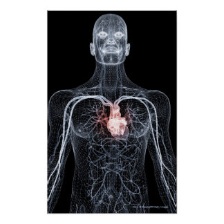 Wireframe de los vasos sanguíneos en el cuerpo sup posters