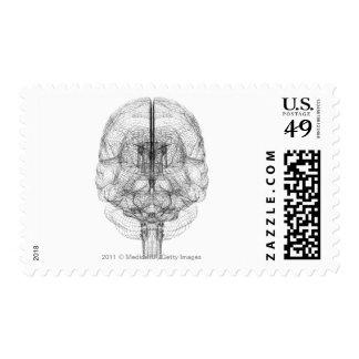 Wireframe del cerebro franqueo