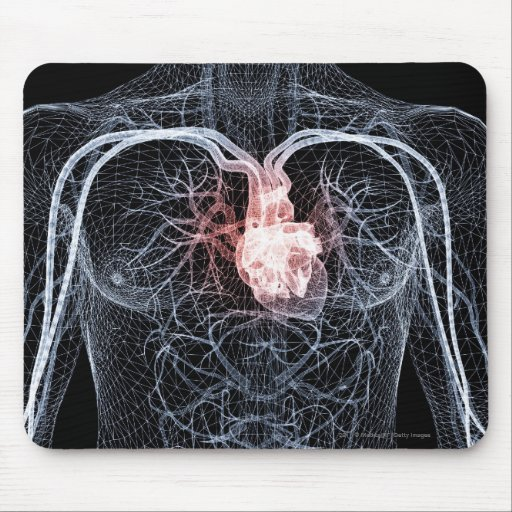 Wireframe of the blood vessels in the upper body mousepad