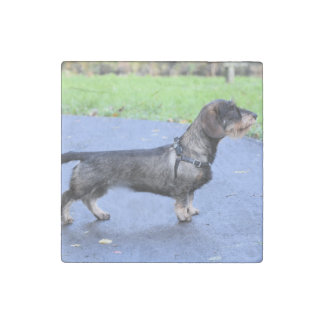 wirehaired dachshund full stone magnet