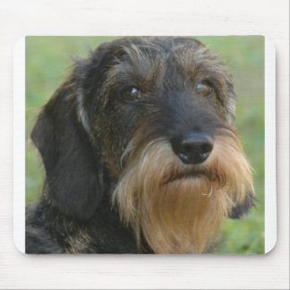 wirehaired dachshund.png mouse pad