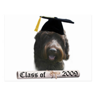 Wirehaired Pointing Griffon Grad 09 Postcard