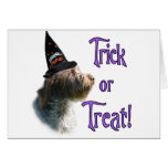 Wirehaired Pointing Griffon Trick Card