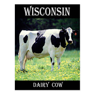 Wisconsin Dairy Cow Postcard