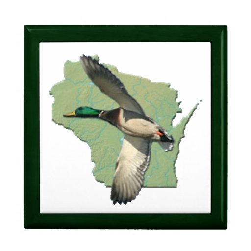 Wisconsin duck  6x6 gift boxes