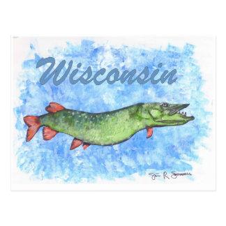Wisconsin Muskie Postcard