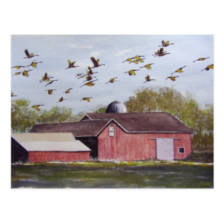 Wisconsin Sand Cranes- postcard