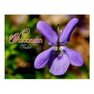 Wisconsin State Flower: Violet Postcard