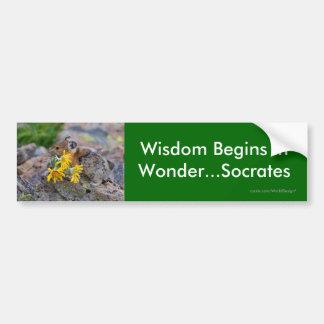 Wisdom Car Bumper Sticker