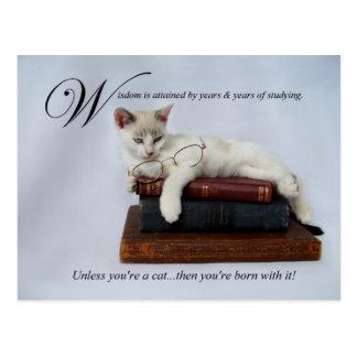 Wisdom (cat) Postcard