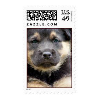 Wise Eyes Postage Stamps