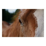 Wise Horse Eye - poster