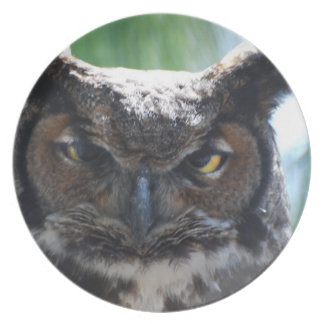 Wise Long Eared Owl Plates