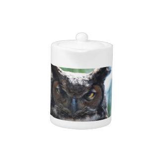 Wise Long Eared Owl