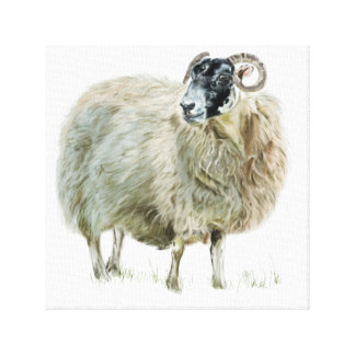 Wise Mother Sheep Canvas Print