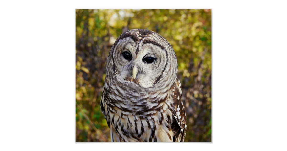 Wise Owl Poster | Zazzle.com