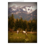 Wish on a White Horse Greeting Card