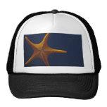 Wish Upon a Starfish Hat