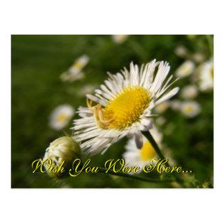 Wish you were here Postcard
