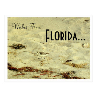 Wishes From, Florida... Postcard