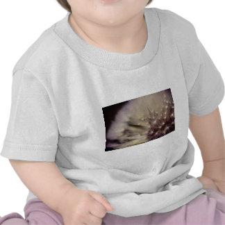 Wishes Tee Shirts