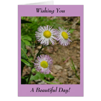 Wishing You A Beautiful Day! - Blank Inside Card