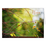 Wispy Branches Cards