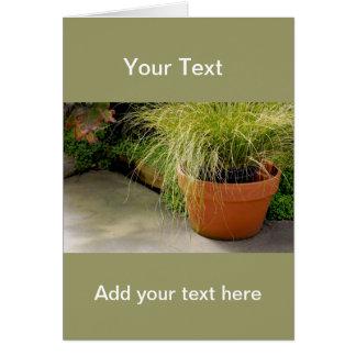 Wispy Grass Cards