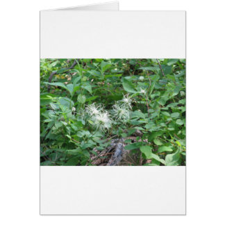 Wispy White Flowers at Glacier National Park Greeting Card