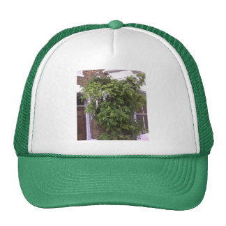 Wisteria and Roses Trucker Hat
