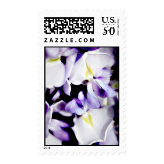 Wisteria Flowers Postage stamps