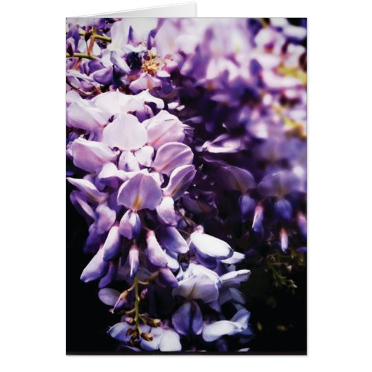 Wisteria Greeting Card (add your text)