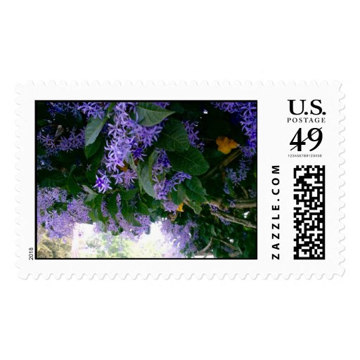 Wisteria in Panama Postage Stamps