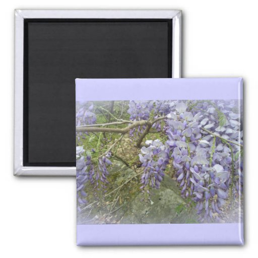 Wisteria in the Woods 2 Inch Square Magnet