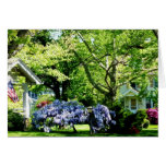 Wisteria on Lawn Greeting Card