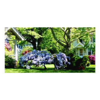 Wisteria on Lawn Photo Card