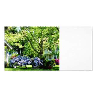 Wisteria on Lawn Picture Card