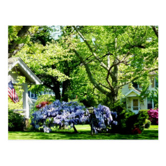 Wisteria on Lawn Post Cards