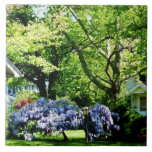 Wisteria on Lawn Tiles