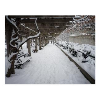 Wisteria Pergola in Winter, Central Park, NYC Postcard