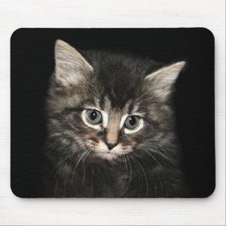 Wistful kitten mousepad