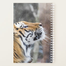 Wistful Winter Tiger Planner