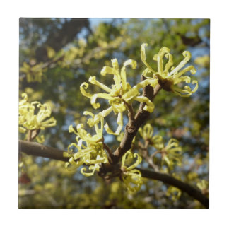 Witch Hazel Flowers Ceramic Tile